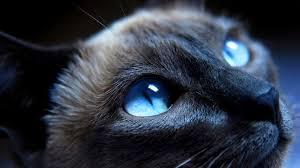 espiritualidade-dos-gatos