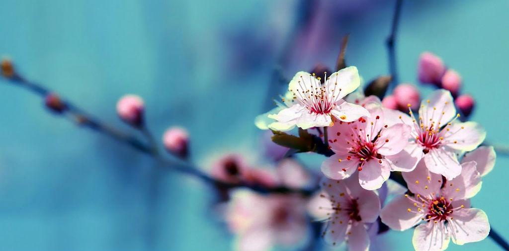 flores-wallpaper