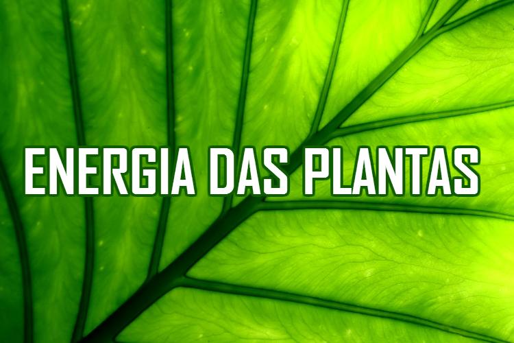energia-das-plantas-entenda